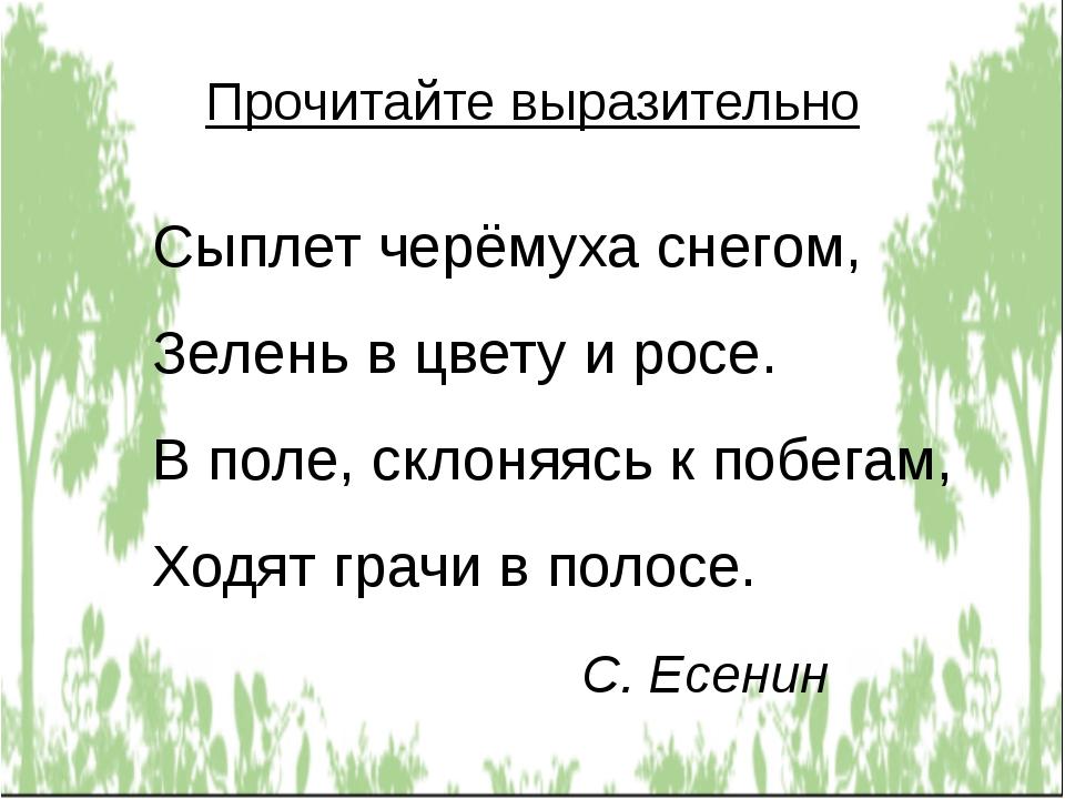 Прочитайте выразительно Сыплет черёмуха снегом, Зелень в цвету и росе. В поле...