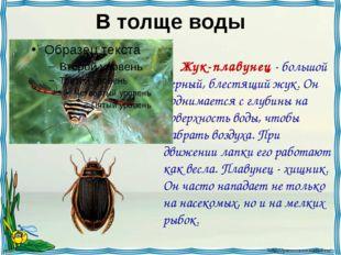 В толще воды Жук-плавунец - большой черный, блестящий жук. Он поднимается с