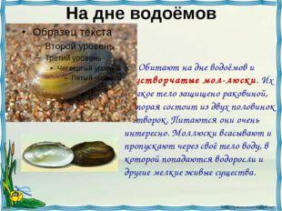 На дне водоёмов Обитают на дне водоёмов и двустворчатые мол-люски. Их мягкое