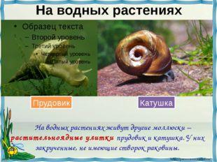 На водных растениях На водных растениях живут другие моллюски – растительноя