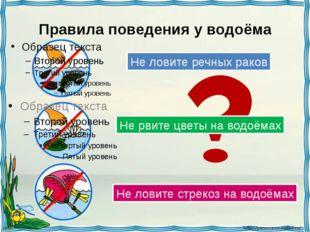 Правила поведения у водоёма Не ловите речных раков Не рвите цветы на водоёмах
