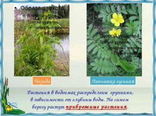 Растения в водоемах распределены группами, в зависимости от глубины воды. На