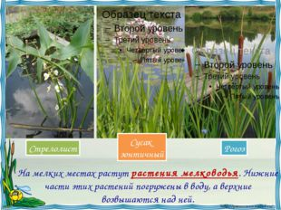На мелких местах растут растения мелководья. Нижние части этих растений погр