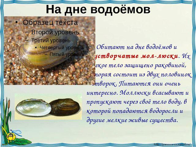 На дне водоёмов Обитают на дне водоёмов и двустворчатые мол-люски. Их мягкое...