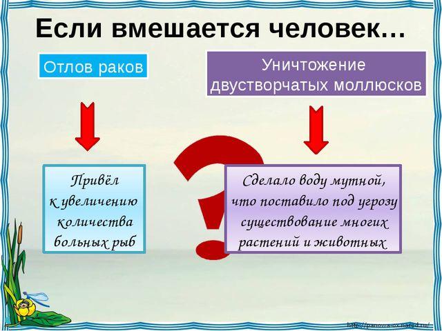 Если вмешается человек… Отлов раков Уничтожение двустворчатых моллюсков Привё...