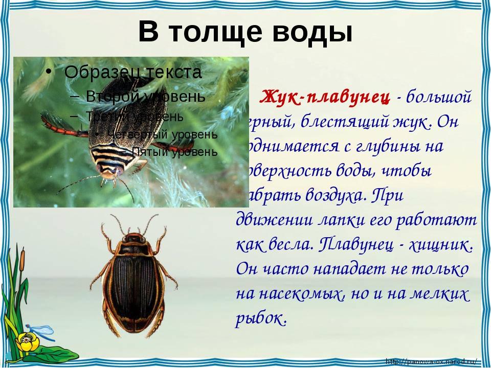 В толще воды Жук-плавунец - большой черный, блестящий жук. Он поднимается с...