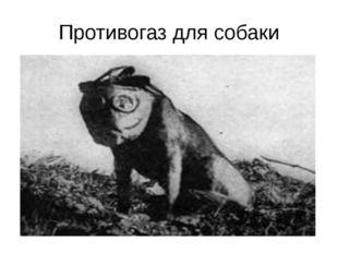 Противогаз для собаки