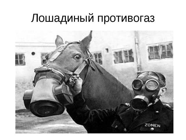 Лошадиный противогаз