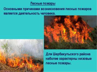 Лесные пожары Основными причинами возникновения лесных пожаров является деяте
