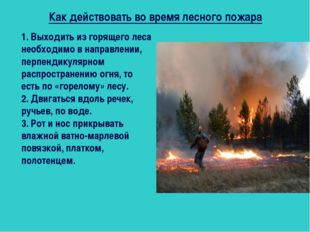 Как действовать во время лесного пожара 1. Выходить из горящего леса необходи