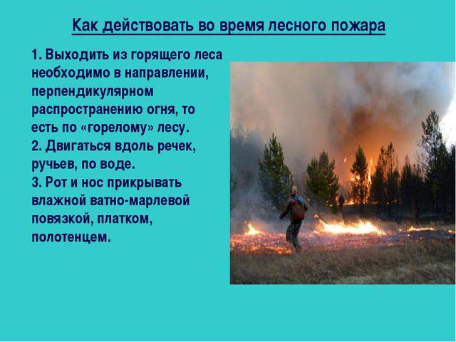 Как действовать во время лесного пожара 1. Выходить из горящего леса необходи...
