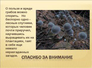 О пользе и вреде грибов можно спорить.  Но беспорно одно - лесные спутники,