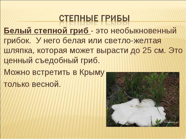 Белый степной гриб - это необыкновенный грибок. У него белая или светло-желта...