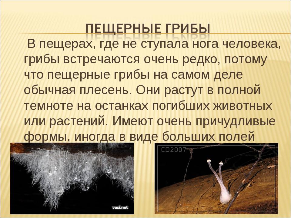 В пещерах, где не ступала нога человека, грибы встречаются очень редко, пото...
