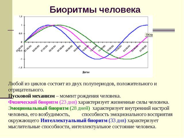 Биоритмы человека Любой из циклов состоит из двух полупериодов, положительног...