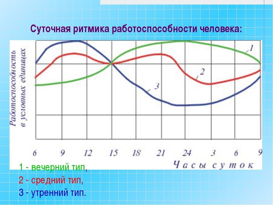 Суточная ритмика работоспособности человека: 1 - вечерний тип, 2 - средний ти...