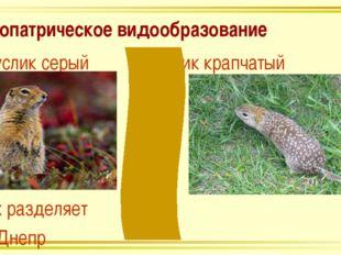 Аллопатрическое видообразование Суслик серый Суслик крапчатый Их разделяет р.