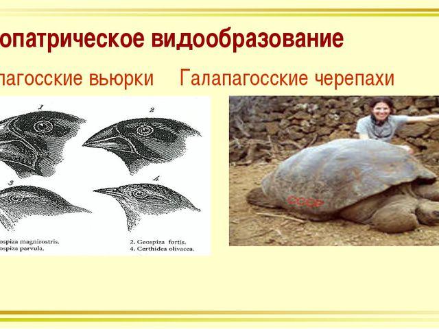 Аллопатрическое видообразование Галапагосские вьюрки Галапагосские черепахи