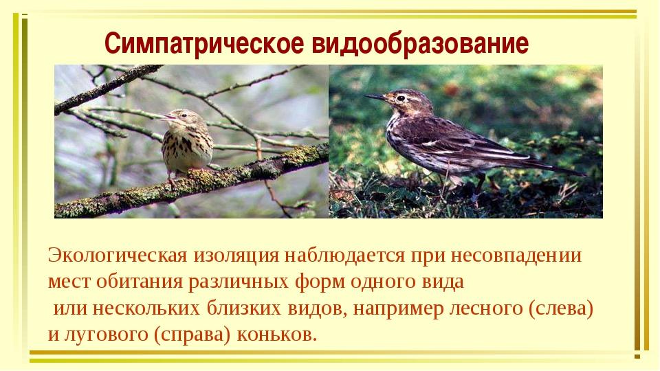 Симпатрическое видообразование Экологическая изоляция наблюдается при несовпа...