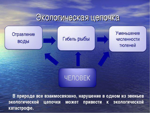 Экологическая цепочка В природе все взаимосвязано, нарушение в одном из звень...