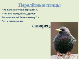 """Перелётные птицы """" Из дальних стран вернулся я, Чтоб вас порадовать, друзья."""