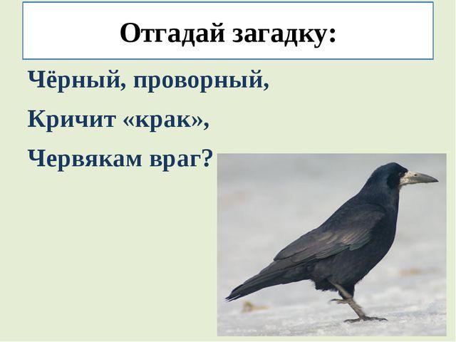 Отгадай загадку: Чёрный, проворный, Кричит «крак», Червякам враг?