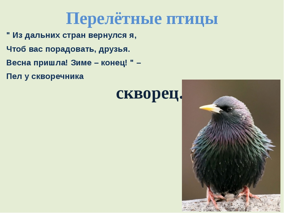 """Перелётные птицы """" Из дальних стран вернулся я, Чтоб вас порадовать, друзья...."""