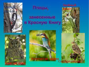 Малый дятел Зелёный дятел Золотистая щурка Садовая овсянка Ушастая сова