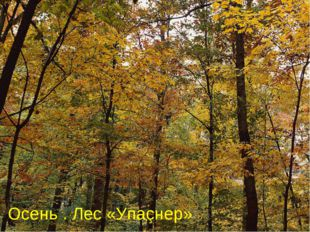 Осень . Лес «Упаçнер»