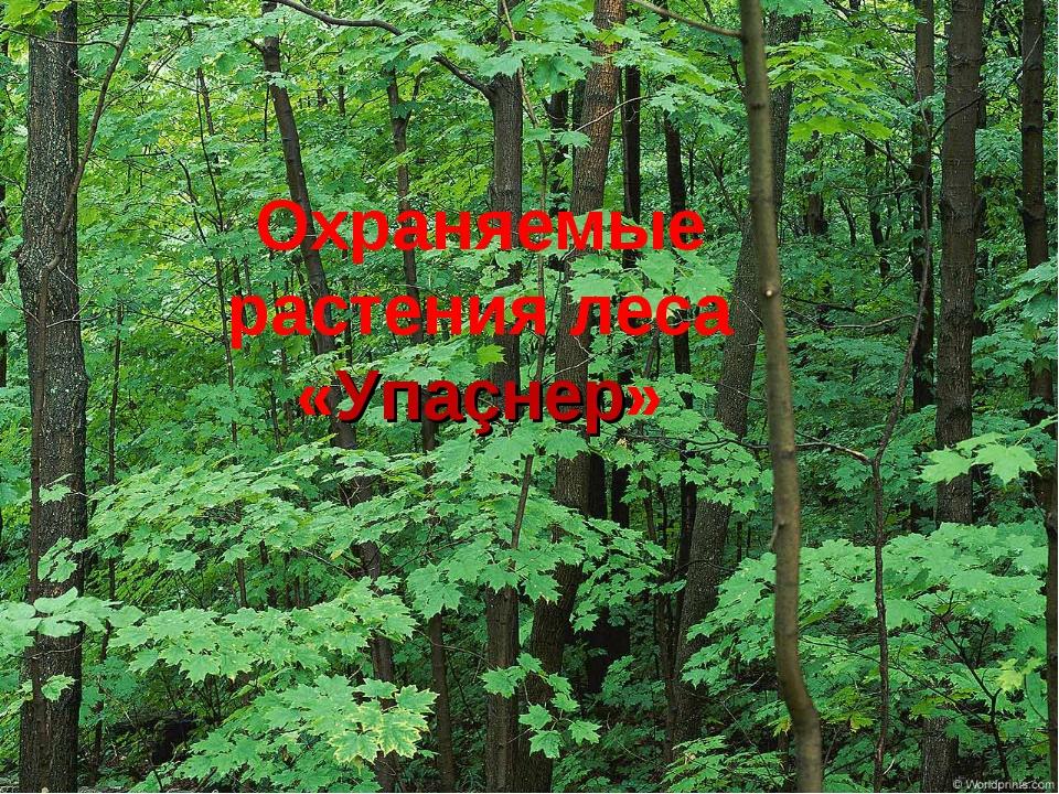 Охраняемые растения леса «Упаçнер»