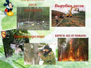 Браконьерство Вырубка лесов Загрязнение леса мусором