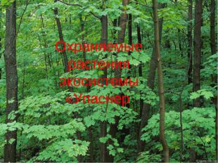 Охраняемые растения экосистемы «Упаснер»