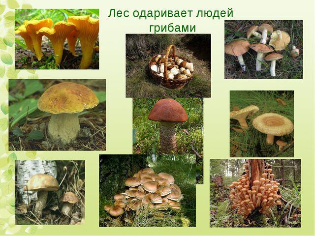 Лес одаривает людей грибами
