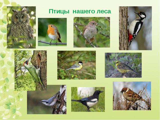 Птицы нашего леса