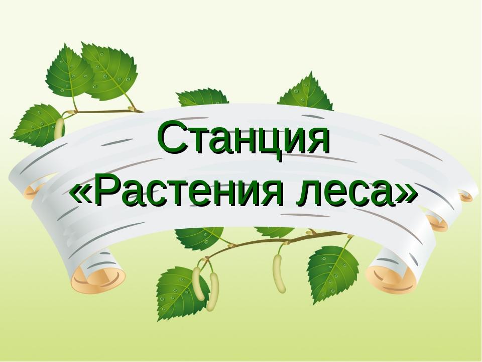 Станция «Растения леса»