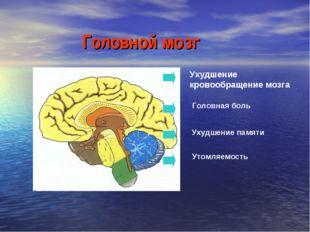 Головной мозг Ухудшение кровообращение мозга Головная боль Ухудшение памяти У