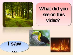 What did you see on this video? I saw …