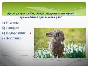 Кролик поранил бок. Какие лекарственные травы применяются при лечении ран? а)