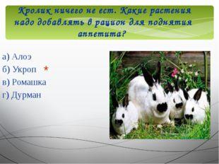 Кролик ничего не ест. Какие растения надо добавлять в рацион для поднятия ап