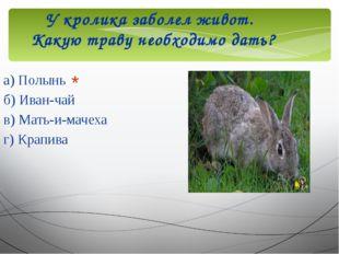У кролика заболел живот. Какую траву необходимо дать? а) Полынь б) Иван-чай в