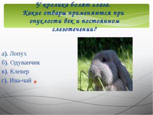 У кролика болят глаза. Какие отвары применяются при опухлости век и постоянно
