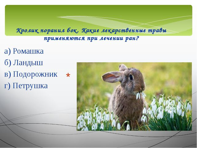Кролик поранил бок. Какие лекарственные травы применяются при лечении ран? а)...