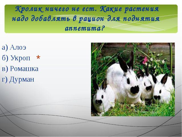 Кролик ничего не ест. Какие растения надо добавлять в рацион для поднятия ап...