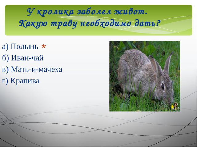 У кролика заболел живот. Какую траву необходимо дать? а) Полынь б) Иван-чай в...