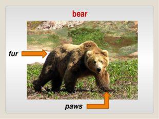 bear fur paws