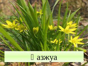 Қазжуа