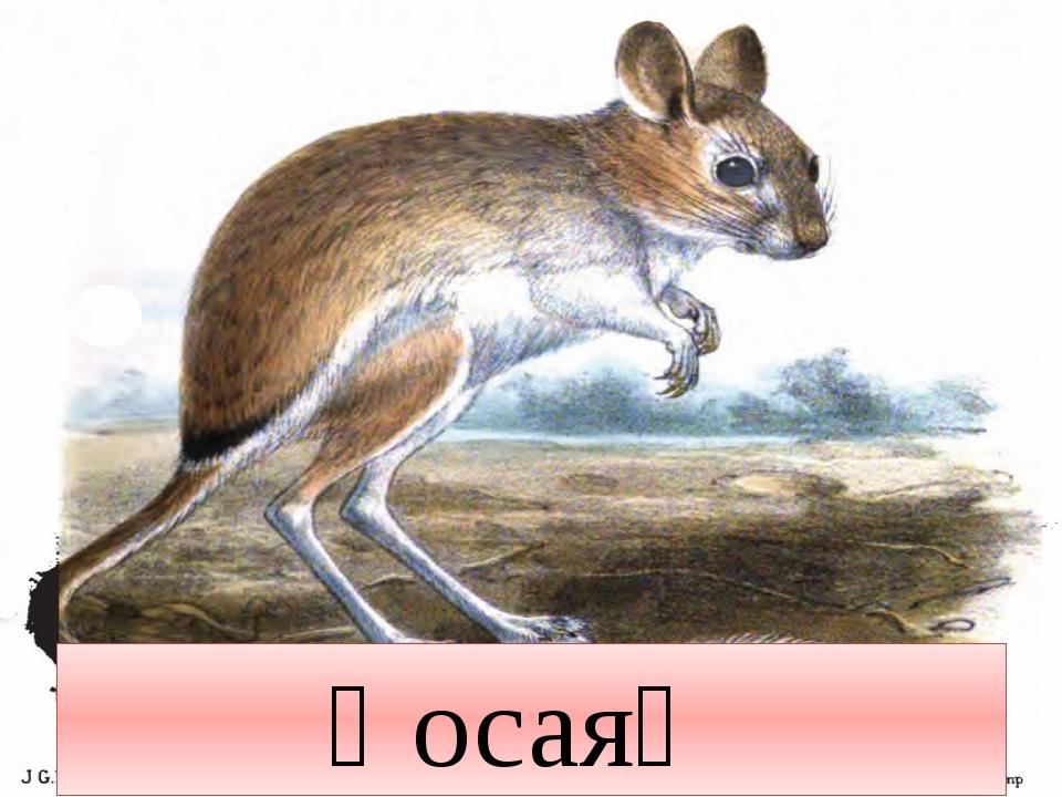 Қосаяқ