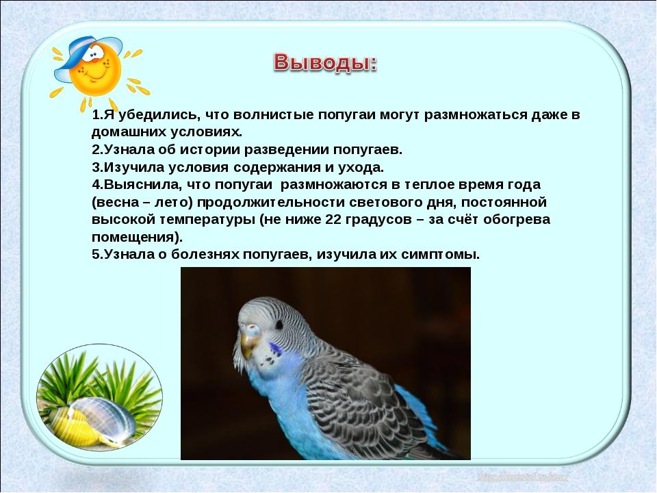 Все про волнистых попугаев в домашних условиях