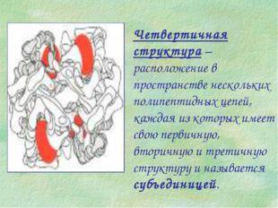 Четвертичная структура – расположение в пространстве нескольких полипептидных