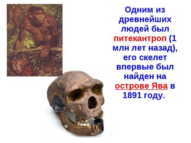 Одним из древнейших людей был питекантроп (1 млн лет назад), его скелет впер...
